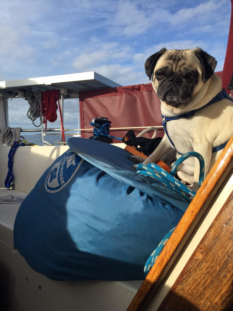 Umphrey Pug Sailing on the Baja Haha